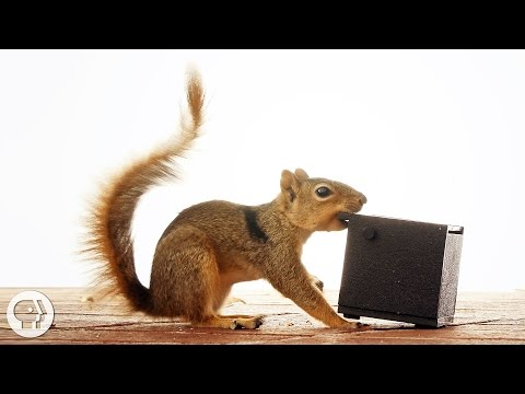 Watch These Frustrated Squirrels Go Nuts! |  Deep Look