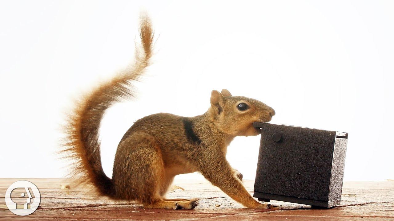 squirrel behavior relative to human contact