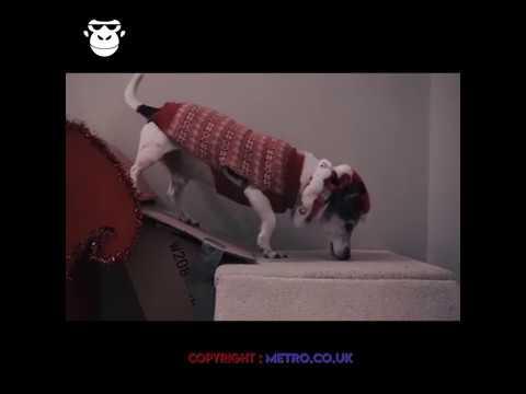Dit moet echt wel het toppunt van dierenliefde zijn!