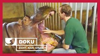 Anti-Babypille für Nilpferde | Experience - Die Reportage | kabel eins Doku