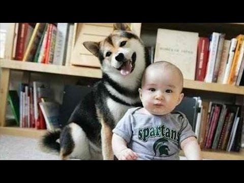 Dogs and babies are good friends - Cute dog & baby compilation