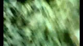 Grzybobranie w Borach Tucholskich część 2