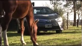 Toyota Corolla 2014 Test Drive en CRASH TEST