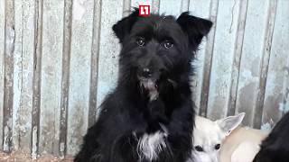 Сотни животных могут умереть в ветприемнике Челябинска