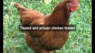 Chicken Feeders | Hens |alameda | Ca | Automatic Chicken Feeder | Feeding Chickens | Poultry Feeders