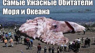 Самые страшные обитатели морских глубин
