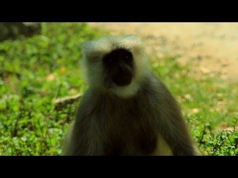 Langur's on the way to Kedarnath Wildlife Sanctuary