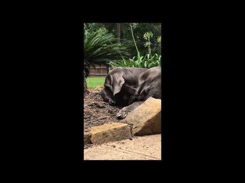 Dog befriends baby bird part 2