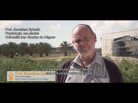Agriculture In The Negev: Today's Desert Pioneers (French Subtitles)
