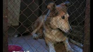 Великолукский центр милосердия для животных(, 2010-01-31T08:30:03.000Z)