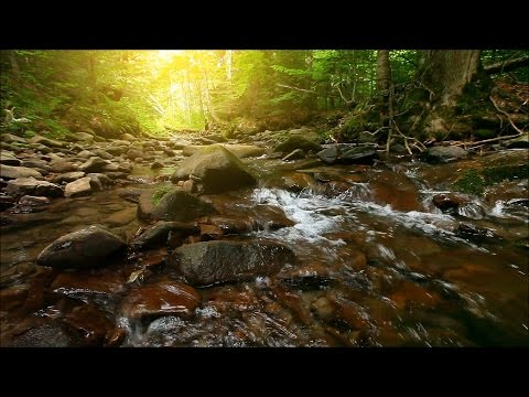 Beautiful stream - 1 hour HD - sounds of water flowing - birds singing - relaxing nature sounds