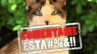 EL BANANERO - COMENTAME ÉSTA #3 (DESPACITO)