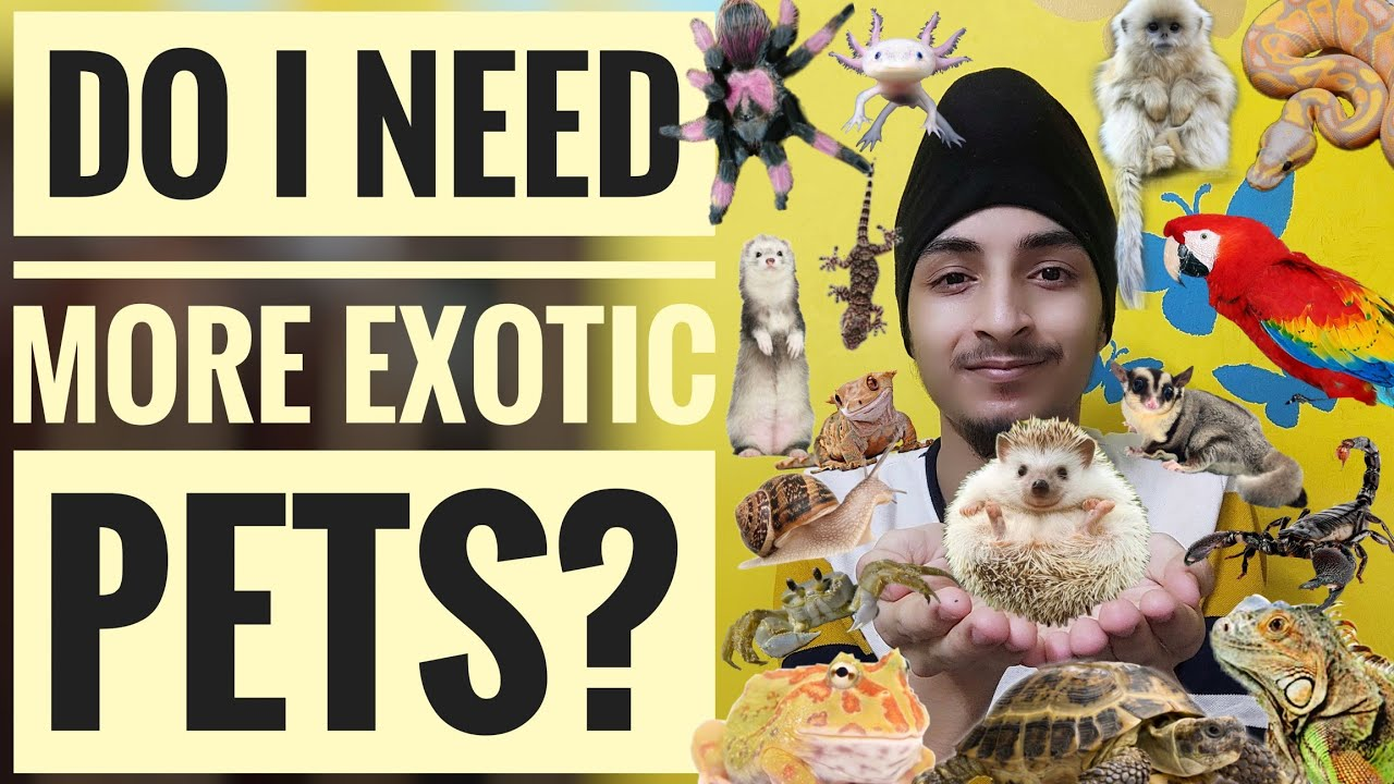 Do I Need More Exotic Pets?   Animals Lovers Special Meme 🐣🐒🦉🐍🦎🦔