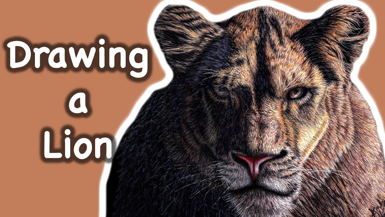 Drawing a Lioness - Time Lapse Drawing