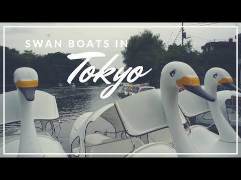 Riding Swan Boats in Tokyo!