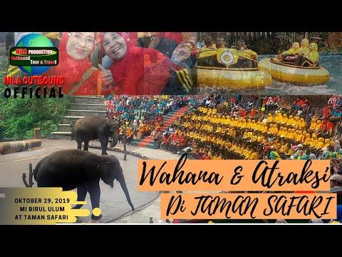 serunya-wisata-edukasi-mi-birul-ulum-di-taman-safari-indonesia-2