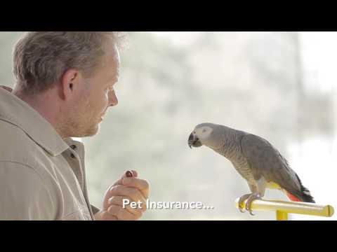 Salesman Parrot