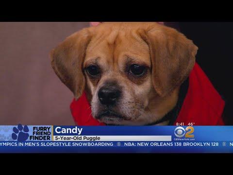 Furry Friend Finder: Valentina & Candy