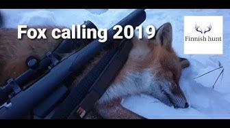 Ketun pillitys, Fox calling 2019 - Finnishhunt