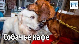 Собаки Чарли и Ремарк обедают в кафе Bau-Bau в Новосибирске