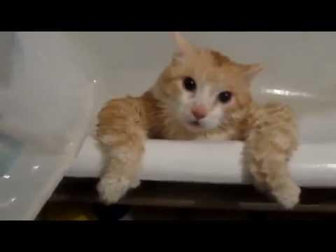 Кот не может выпрыгнуть из ванны видео