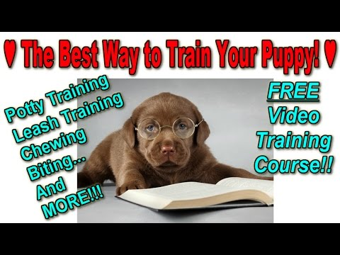 how-to-train-a-puppy-fast-♥-free-training-course-♥-best-way-to-potty-train-a-puppy-☺☺☺