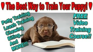 How To Train A Puppy Fast ♥ FREE TRAINING COURSE ♥ Best Way To Potty Train A Puppy ☺☺☺