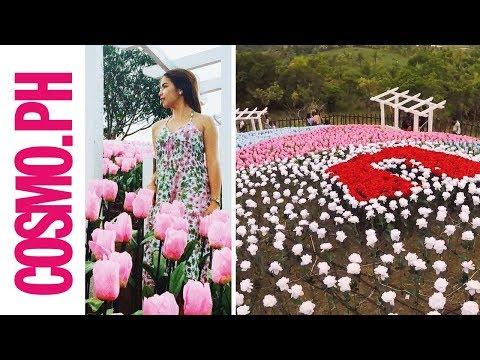 This Glowing Garden In Bohol Has 20,000 Flowers