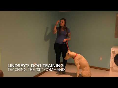 Teaching your dog the 'sit' command