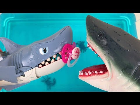 Learn Sea Animals with Whales, Dolphins, Baby Sharks Find Mom - Fun Song For Kids