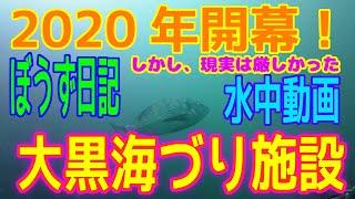 ぼうず&水中動画(2020年1月7日)in 大黒海づり施設