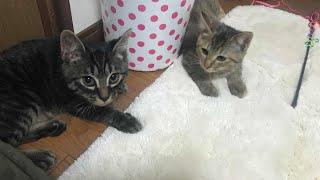 猫の爪切りしましたฅ^•ﻌ•^ฅパチン🗯 thumbnail