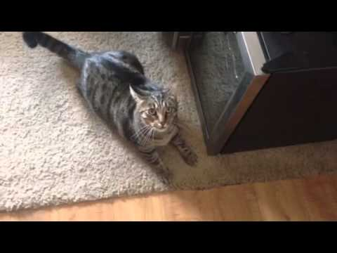Cranky kitty hates neighborhood stray