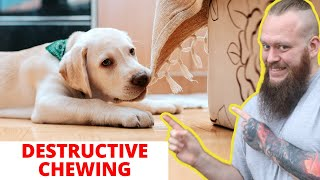 How To Stop Destructive Chewing In Dogs And Puppies