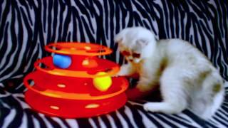 Cat Toys Mainan Kucing Crazy hyperactive ball