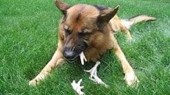 RAW Basics - Raw Dog Food (chicken feet)
