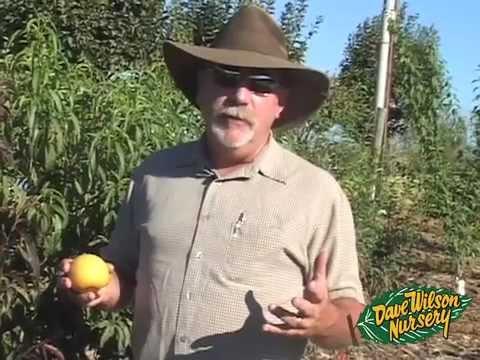 Backyard Fruit Tree Basics