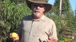 Backyard Fruit Tree Basics