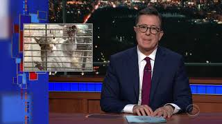 Stephen Colbert - June 21, 2019 - Meanwhile, a man who fed meth to his squirrel.