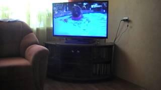 В Орске собаки телевизор смотреть не любят