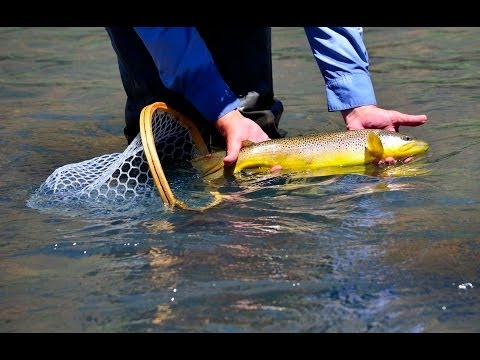 Oregon Brown Trout- A Desert Experience HD