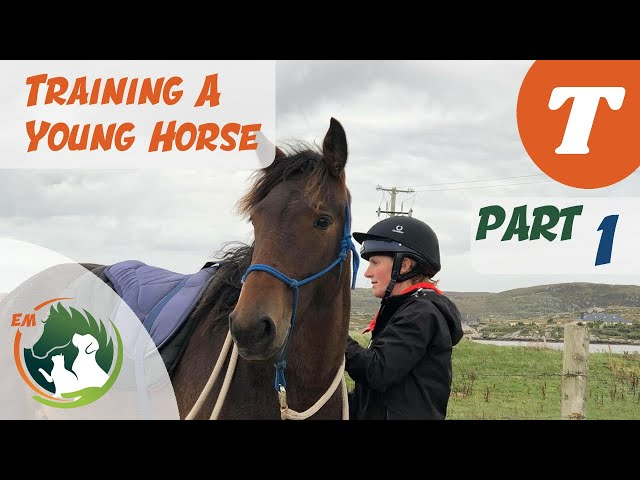 Starting a young horse | Training series | Emma Massingale (Part 1 of 3)