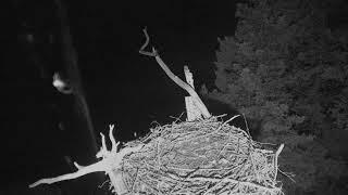 Audubon Osprey Nest Cam 09-21-2018 02:18:45 - 03:18:46 thumbnail