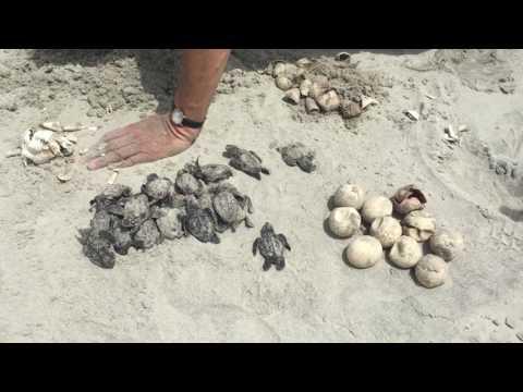 Marine turtle conservation program patrols Otter Island