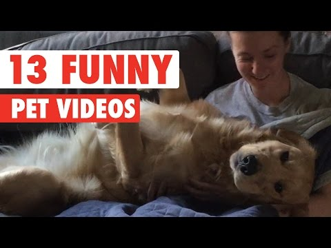 13 Funny Pet Videos Compilation 2016