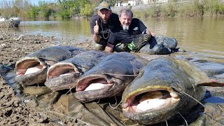 MASSIVE CATFISH FOR THE ZECK FISHING TEAM IN SEVERAL FRENCH RIVERS - HD CATFISH WORLD
