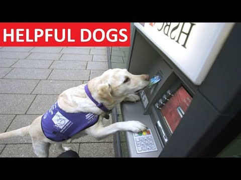 HELPFUL DOGS - Funny Dog Videos Compilation - Funny Dogs
