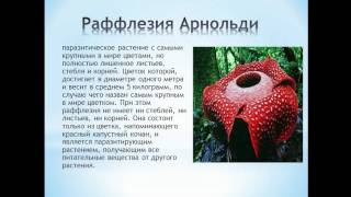 Презентация на тему Удивительные растения, 3 класс