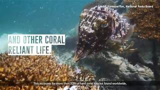 JTClimateAction Ep 2: Caring about coral reefs - Purpose-Built Reef Structures