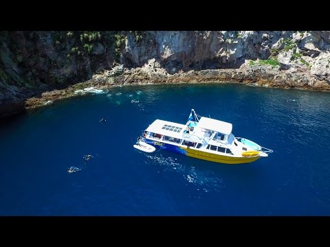 Dive Tutukaka - Exploring the Poor Knights!